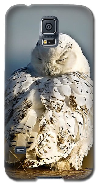 Sleeping Snowy Owl Galaxy S5 Case