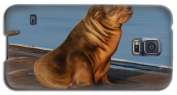 Galaxy S5 Case featuring the photograph Sleeping Wild Sea Lion Pup  by Christy Pooschke