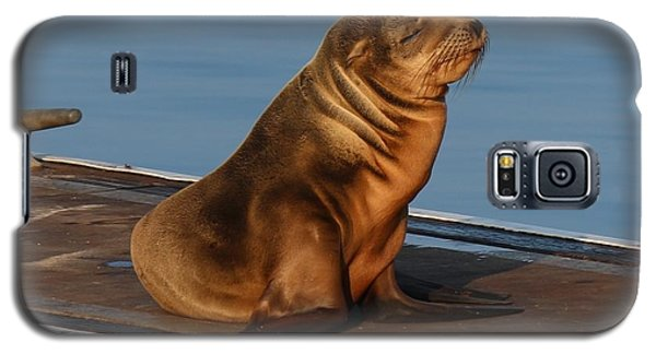 Sleeping Wild Sea Lion Pup  Galaxy S5 Case by Christy Pooschke
