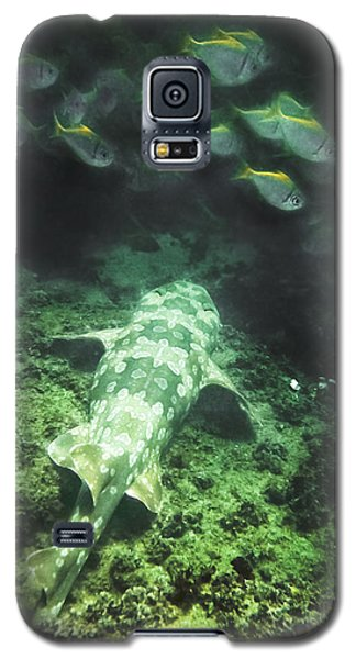 Sleeping Wobbegong And School Of Fish Galaxy S5 Case by Miroslava Jurcik
