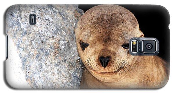 Sleepy Baby Sea Lion Galaxy S5 Case