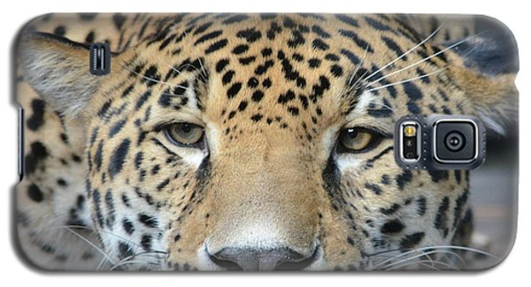 Sleepy Jaguar Galaxy S5 Case