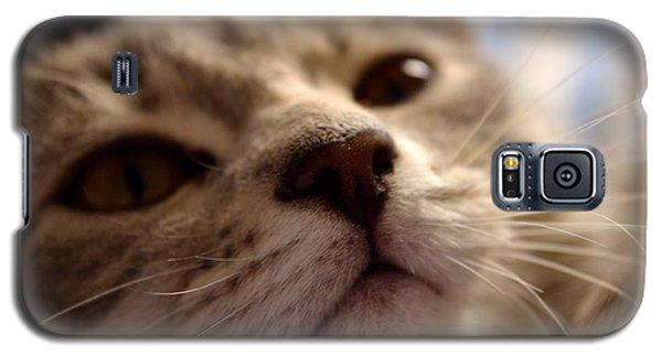 Sleepy Kitten Galaxy S5 Case