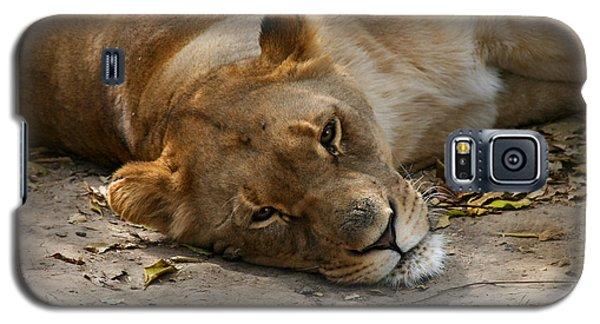 Sleepy Lioness Galaxy S5 Case by Ann Lauwers