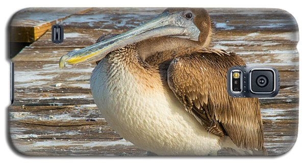 Sleepytime Pelican II Galaxy S5 Case