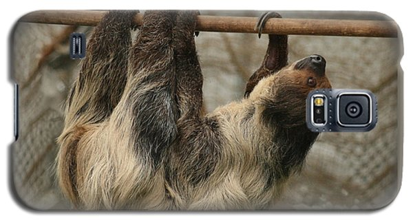 Sloth Galaxy S5 Case