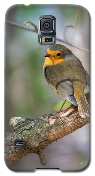 Small Bird Robin Galaxy S5 Case by Jivko Nakev