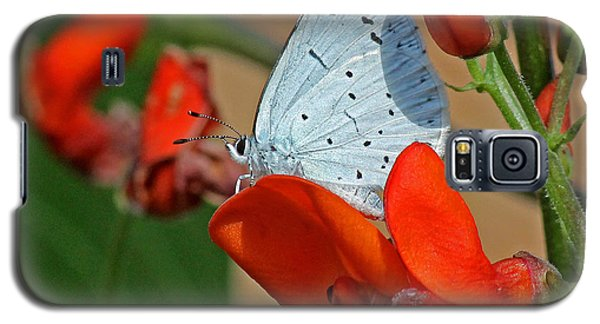 Small Blue Butterfly Galaxy S5 Case