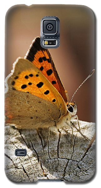 Small Copper Butterfly Galaxy S5 Case
