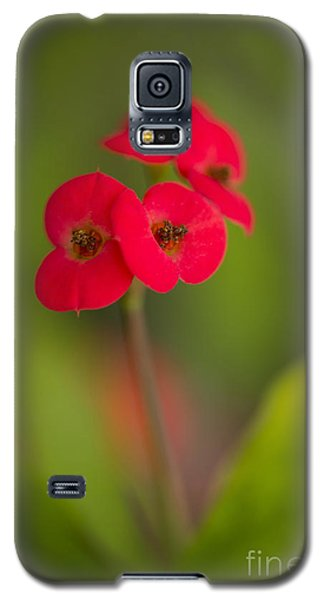 Small Red Flowers With Blurry Background Galaxy S5 Case