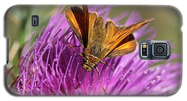 Galaxy S5 Case featuring the photograph Small Skipper - Thymelicus Sylvestris by Jivko Nakev