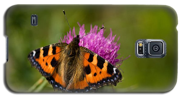 Galaxy S5 Case featuring the photograph Small Tortoiseshell Butterfly by Liz  Alderdice