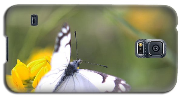 Small White Butterfly On Yellow Flower Galaxy S5 Case by Belinda Greb