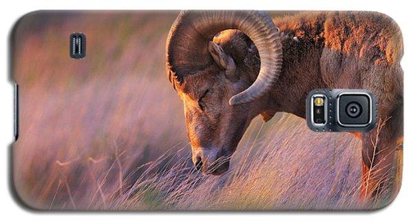 Wildlife Galaxy S5 Case - Smell The Wind by Kadek Susanto