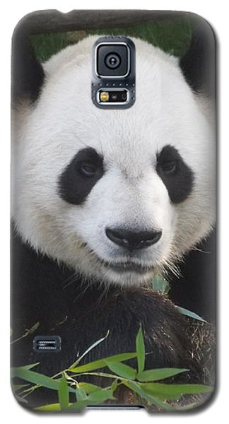 Smiling Giant Panda Galaxy S5 Case by Lingfai Leung