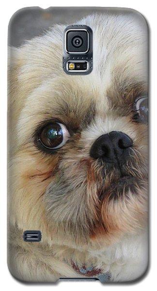 Smitten Galaxy S5 Case by Ramona Johnston