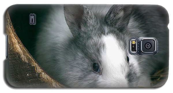 Smokey Galaxy S5 Case by Living Color Photography Lorraine Lynch