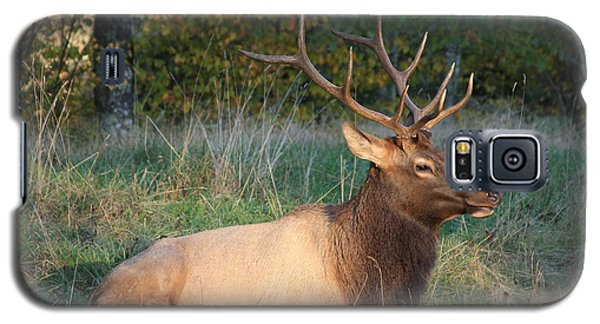 Galaxy S5 Case featuring the photograph Smoky Mountain Elk by Mountains to the Sea Photo
