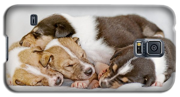 Smooth Collie Puppies Taking A Nap Galaxy S5 Case