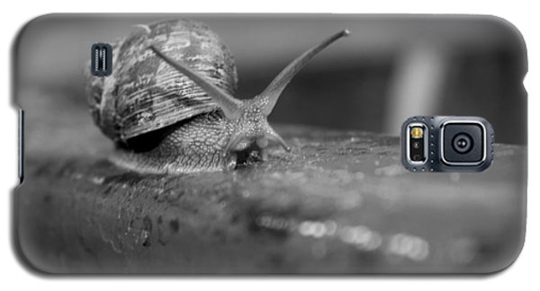 Galaxy S5 Case featuring the photograph Snail by Lora Lee Chapman