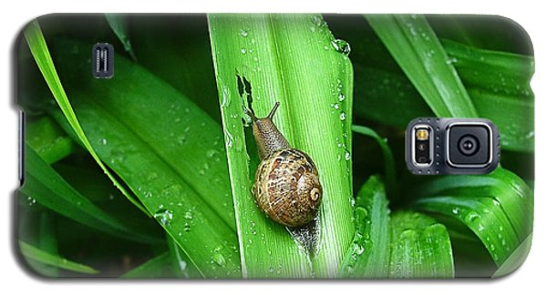 Galaxy S5 Case featuring the photograph Snail Muncher by Wendy McKennon
