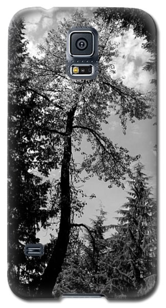 Galaxy S5 Case featuring the photograph Snake Tree - Lost Lake -whistler by Amanda Holmes Tzafrir