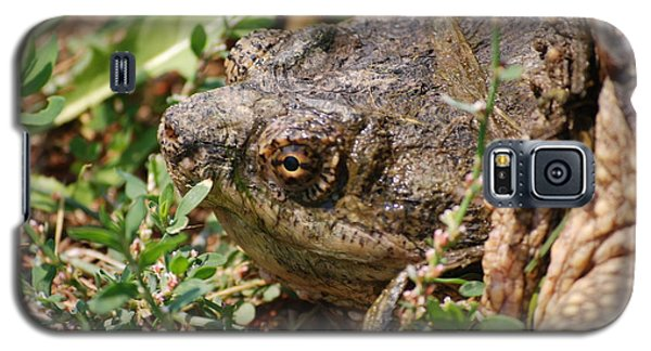 Galaxy S5 Case featuring the photograph Snapping Turtle Head by Mark McReynolds