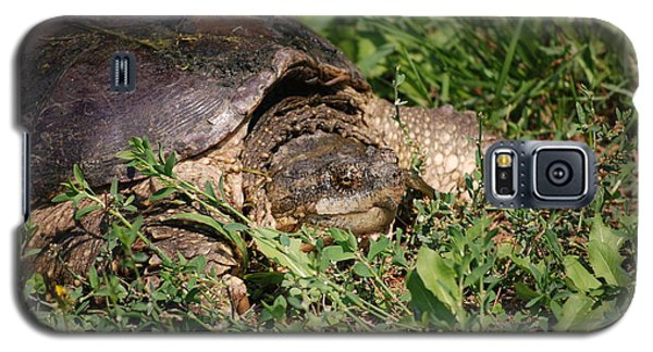 Galaxy S5 Case featuring the photograph Snapping Turtle by Mark McReynolds