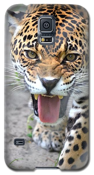 Snarling Jaguar  Galaxy S5 Case
