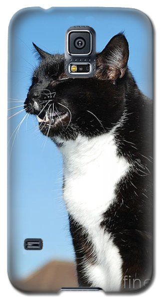 Sneezing Cat Galaxy S5 Case