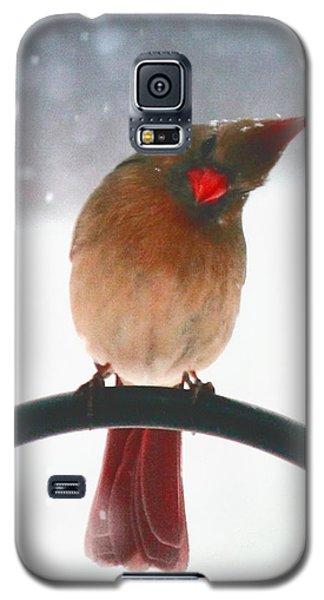 Snow Bird Galaxy S5 Case