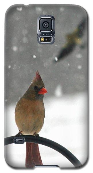 Snow Bird II Galaxy S5 Case