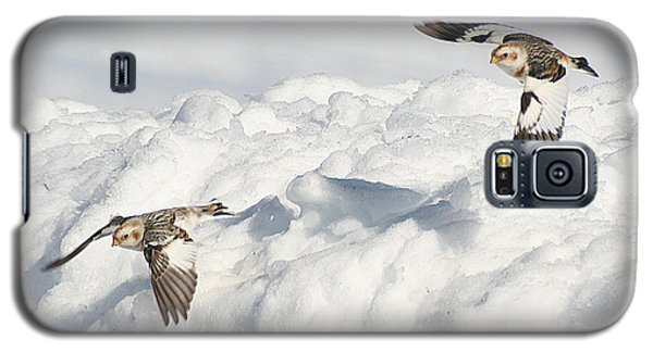 Snow Buntings In Flight Galaxy S5 Case