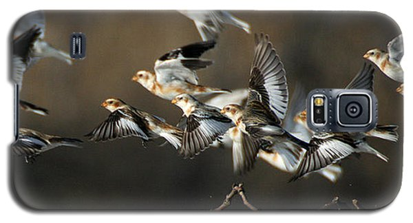 Snow Buntings Taking Flight Galaxy S5 Case