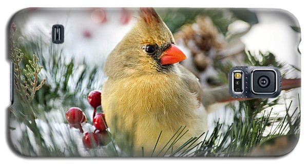 Galaxy S5 Case featuring the photograph Snow Cardinal by Christina Rollo
