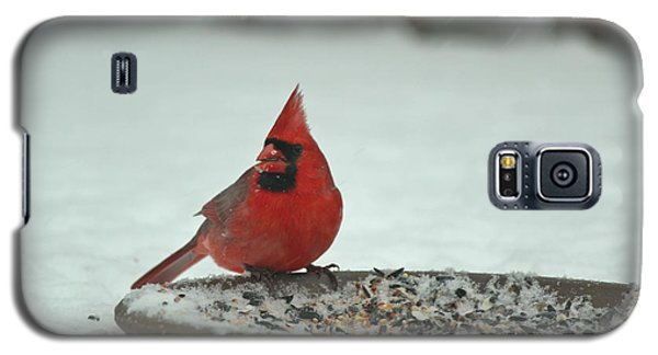 Snow Cardinal Galaxy S5 Case