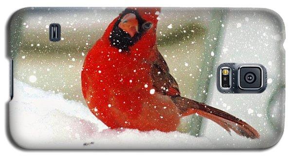 Snow Cardinal Galaxy S5 Case by Yumi Johnson