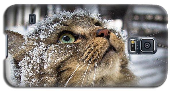 Snow Cat Galaxy S5 Case by Shane Holsclaw