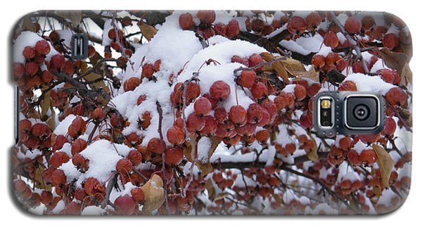 Snow Covered Berries Galaxy S5 Case