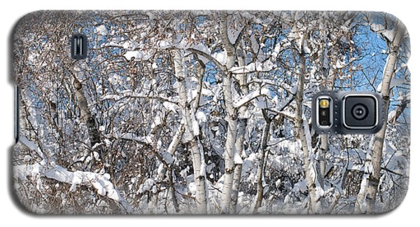 Snow Covered Birch Trees Galaxy S5 Case