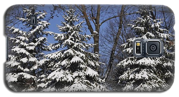 Snow Covered Pines Galaxy S5 Case