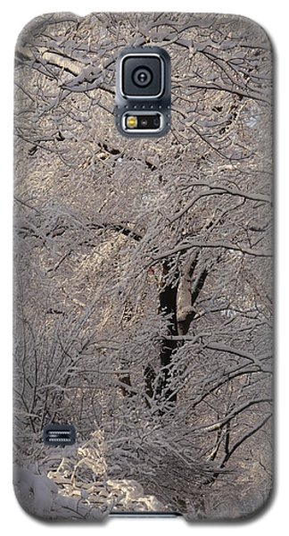 Snow Covered Trees On Central Park West Galaxy S5 Case