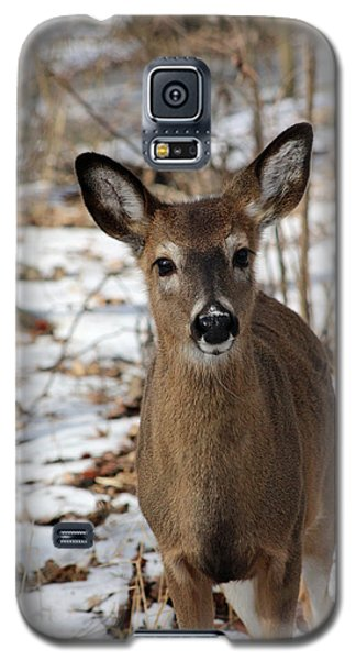 Galaxy S5 Case featuring the photograph Snow Deer by Lorna Rogers Photography