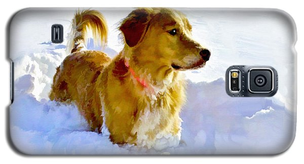 Snow Dog Galaxy S5 Case by Bradley Clay