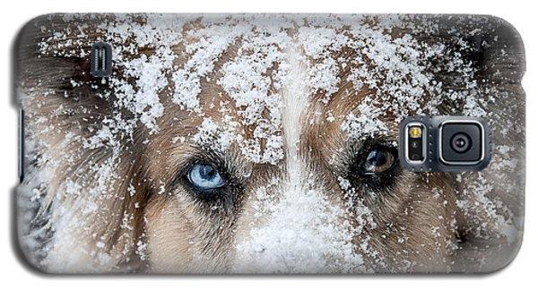 Snow Dog Galaxy S5 Case