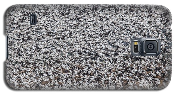 Galaxy S5 Case featuring the photograph Snow Geese by Brian Williamson