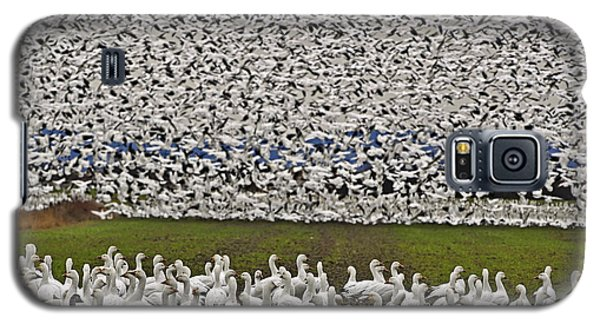 Galaxy S5 Case featuring the photograph Snow Geese By The Thousands by Valerie Garner
