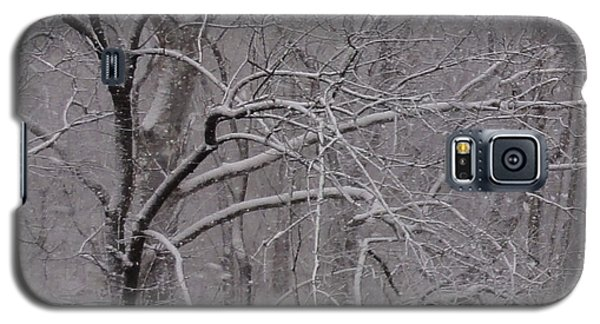 Snow In The Trees At Bulls Island Galaxy S5 Case