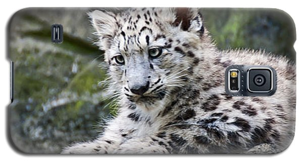 Snow Leopard Cub Galaxy S5 Case