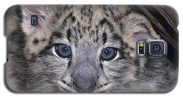 Snow Leopard Cub Endangered Galaxy S5 Case